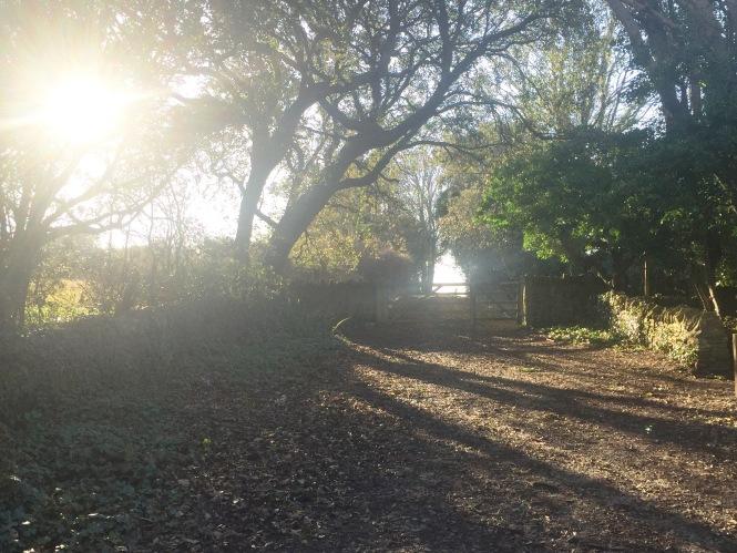 Purbeck Sun through Woods.jpg